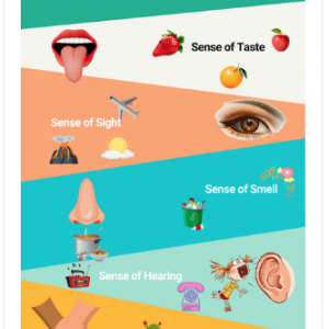 Printable Five Senses Worksheets